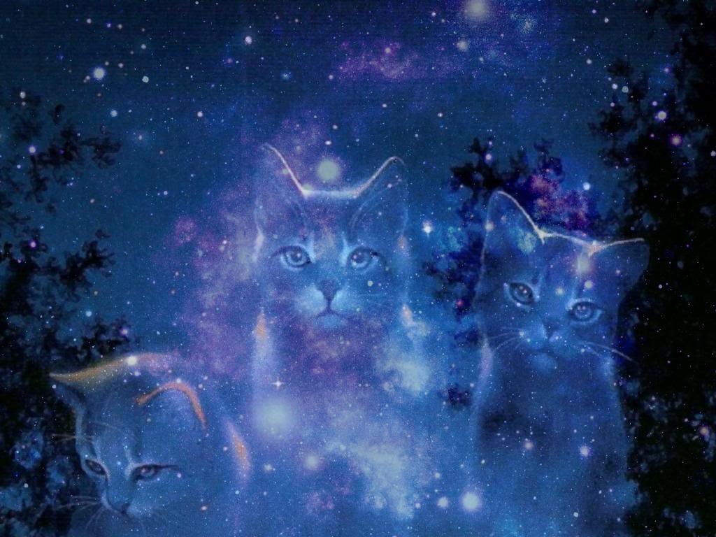 """Recenzie: """"Pisicile Războinice 10: Noua Profetie – Strălucirea Stelelor"""" – Erin Hunter"""