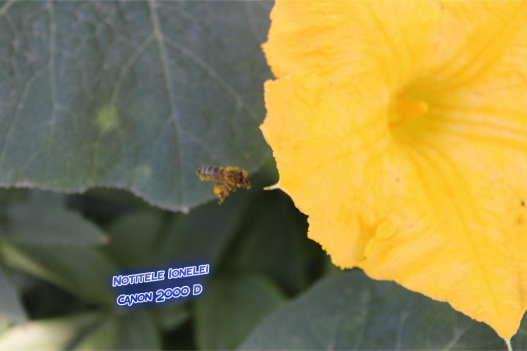 Albina, polen, floare